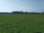 Open velden