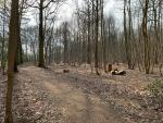 Boske Kruisheide