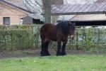 Anita het paard