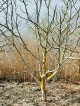 Mos op boom aan Scheldedijk: windrichting ?