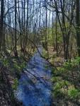 Vochtig bos