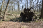 liggend dood hout