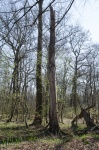 staand dood hout