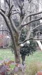 Geen voedertafel maar voederboom..met kerstverlichting..romantiek voor de vogeltjes en even lekker - Rudi.jpeg