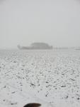 Winter in Hingene 1.jpg